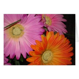 ガーベラのデイジーの庭 カード