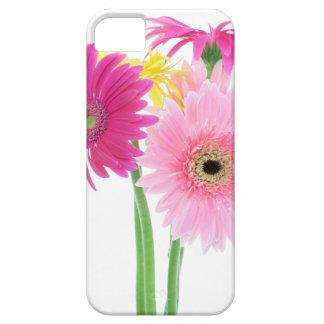 ガーベラのデイジーの花 iPhone SE/5/5s ケース