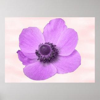 ガーリーなピンクのアネモネの花のプリント ポスター