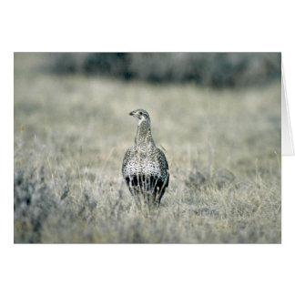 キジオライチョウ、雌鶏 グリーティングカード
