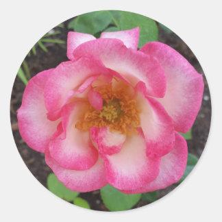 キスの欲求のバラの円形のステッカー、封筒のシーラー ラウンドシール