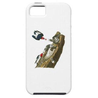 キツツキのジョン赤い先頭に立たれたAudubonの鳥アメリカ iPhone SE/5/5s ケース