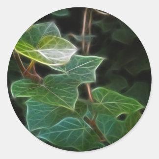 キヅタのつる植物10 ラウンドシール