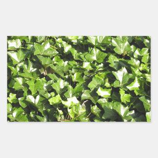 キヅタの植物 長方形シール