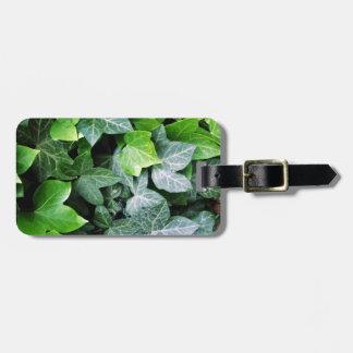 キヅタの葉 ラゲッジタグ