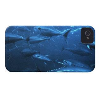キハダマグロの学校 Case-Mate iPhone 4 ケース