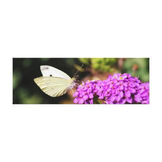 キャベツ白の蝶キャンバス キャンバスプリント