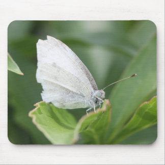 キャベツ白 マウスパッド