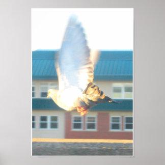 キャンバスのハトプリント ポスター