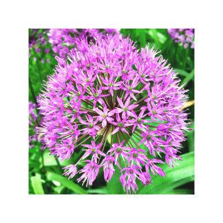 キャンバスの巨大な紫色の葱類の花 キャンバスプリント