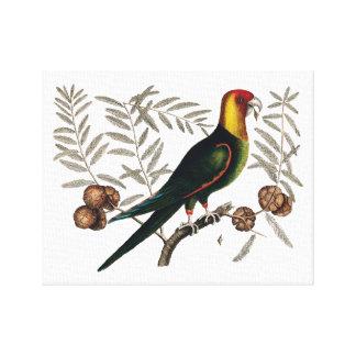 キャンバスの旧式な鳥の絵 キャンバスプリント