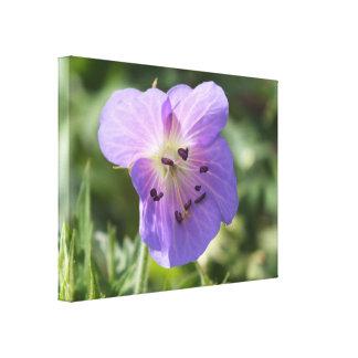 キャンバスの紫色のゼラニウムの花 キャンバスプリント