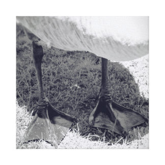 キャンバスの自然のガチョウの写真撮影 キャンバスプリント