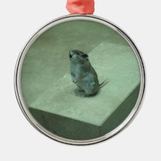 キラーマウス(Onychomysのleucogaster)の喚き声! メタルオーナメント
