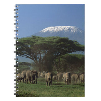 キリマンジャロのElphants ノートブック