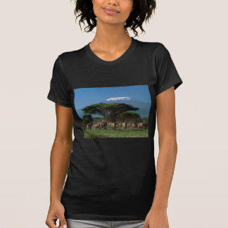 キリマンジャロのElphants Tシャツ