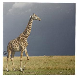 キリンおよび嵐の空のGiraffaのcamelopardalis タイル