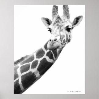 キリンの白黒ポートレート ポスター