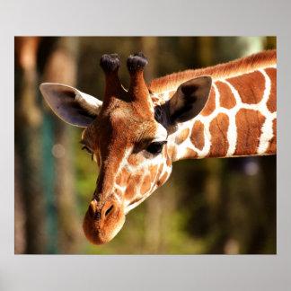 キリンポスター-サファリの野性生物の動物園動物 ポスター