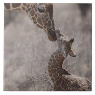 キリン、ケニヤ、アフリカ タイル