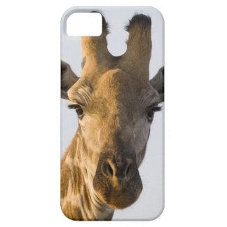 キリン(Giraffaのcamelopardalis)のポートレート、Imire iPhone SE/5/5s ケース