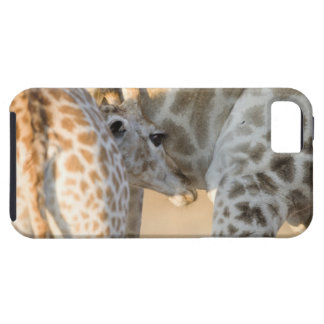 キリン(Giraffaのcamelopardalis)の子牛の乳児、 iPhone SE/5/5s ケース