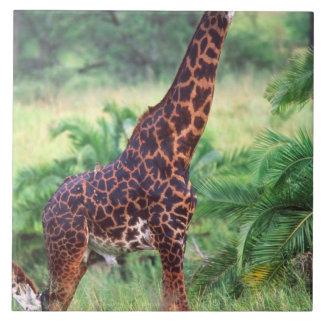 キリン、Giraffaのcamelopardalis、タンザニアアフリカ2 タイル