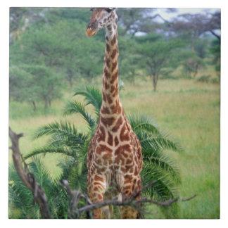 キリン、Giraffaのcamelopardalis、タンザニアアフリカ タイル