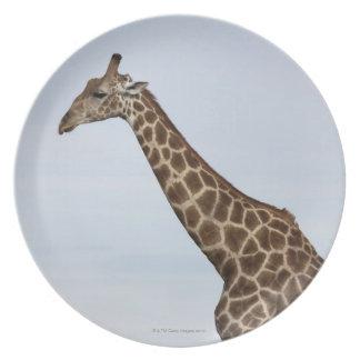 キリン(Giraffaのcamelopardalis)、Chobeの国民 プレート
