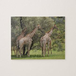 キリン、Giraffaのcamelopardalis、Kgalagadi 2 ジグソーパズル