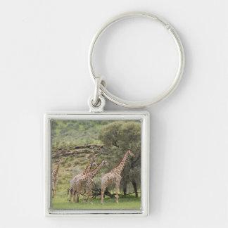 キリン、Giraffaのcamelopardalis、Kgalagadi 3 キーホルダー