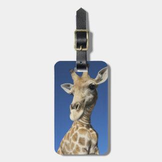 キリン(Giraffa Camelopardalis)のポートレート ラゲッジタグ