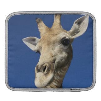 キリン(Giraffa Camelopardalis)のポートレート iPadスリーブ