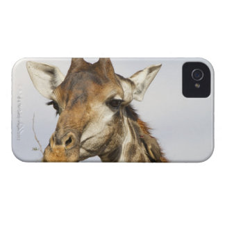 キリン、Krugerの国立公園、南アフリカ共和国 Case-Mate iPhone 4 ケース