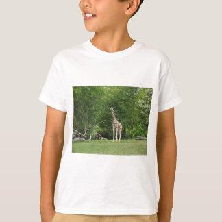 キリン Tシャツ