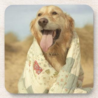 キルトの下のビーチのポートレート犬。 秋 コースター