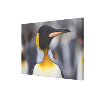 キングペンギンコウテイペンギン属のpatagonicus)、金ゴールド キャンバスプリント