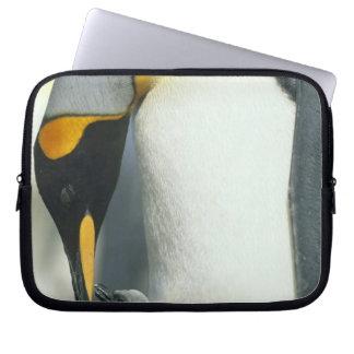 キングペンギン、(コウテイペンギン属のpatagonicus)、 ラップトップスリーブ