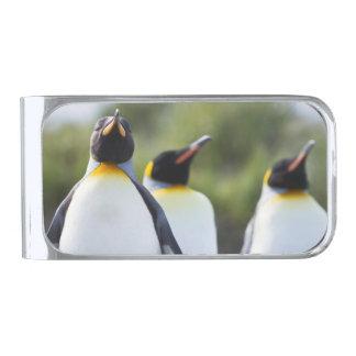 キングペンギン シルバー マネークリップ