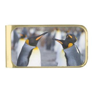 キングペンギン 金色 マネークリップ