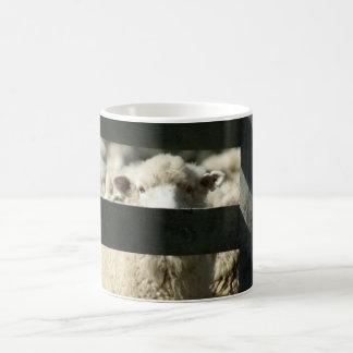 キーウィのヒツジ コーヒーマグカップ