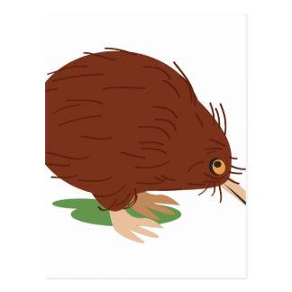 キーウィの鳥 ポストカード