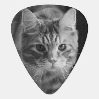 ギターピックのメインのあらいぐま猫 ギターピック