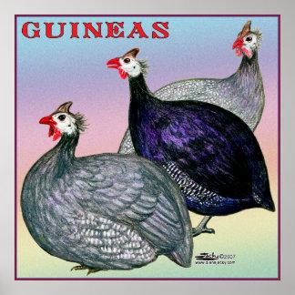 ギニー3の家禽 ポスター