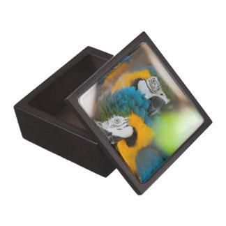 ギフト用の箱の青のコンゴウインコ ギフトボックス
