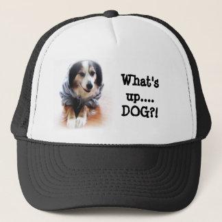 ギャング犬の身に着けているフード付きスウェットシャツ キャップ