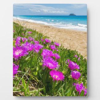 ギリシャの海岸のピンクのつらら植物 フォトプラーク
