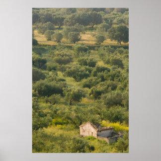 ギリシャのIonian島、KEFALONIA、Havriata: ポスター