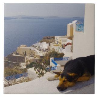 ギリシャのSantoriniの島、Oia都市、犬の睡眠 タイル