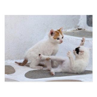 ギリシャ、Mykonosの子ネコのすること ポストカード